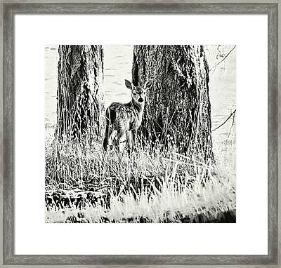 Curious Framed Print by Kathy Bassett