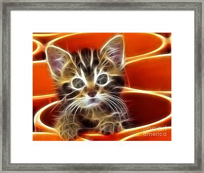Curious Kitten Framed Print by Pamela Johnson