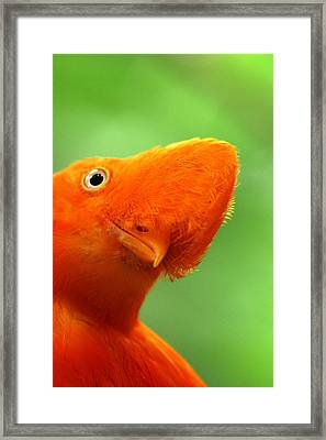 Curious Framed Print by Linda Russell