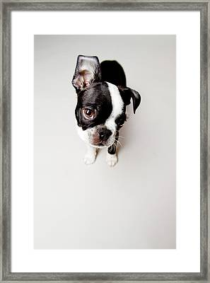 Curious Framed Print by Square Dog Photography