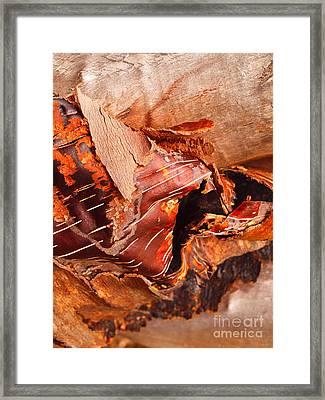 Curled Bark Framed Print by Tara Turner