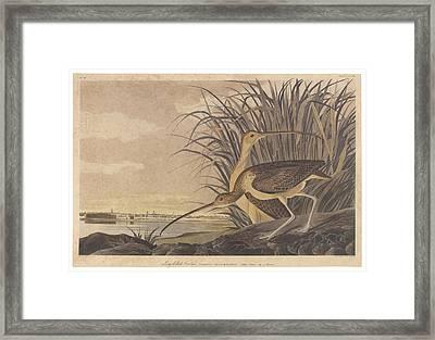 Curlew Framed Print by John James Audubon