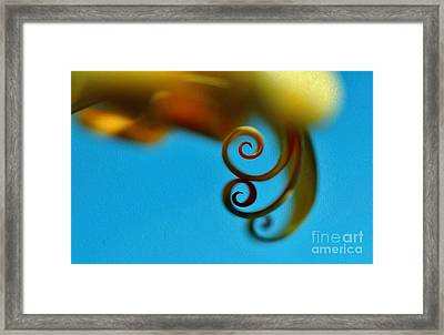 Curlz Abstract Framed Print by Kaye Menner