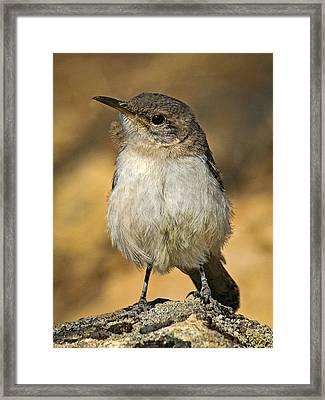 Cute Baby Bird By Jean Noren Framed Print by Jean Noren