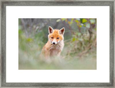 Camouflage Framed Print featuring the photograph Cute Baby Fox by Roeselien Raimond