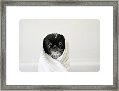 Cute Dog Wrapped Framed Print by Emma Mayfield Photography