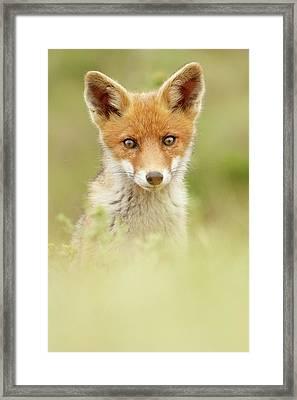 Cute Foxy Face Framed Print by Roeselien Raimond