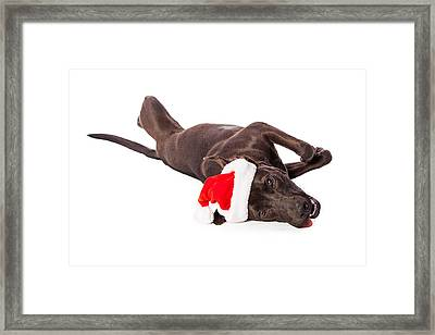 Cute Labrador Dog Laying Wearing Santa Hat  Framed Print by Susan  Schmitz