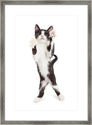 Cute Playful Kitten With Paws Up In Air Framed Print by Susan Schmitz