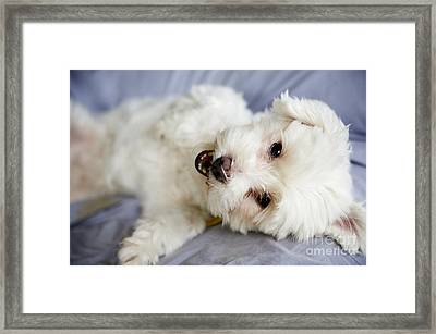 Cute Puppy Framed Print by Kicka Witte - Printscapes