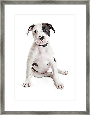 Cute Puppy Sitting To Side On White Framed Print by Susan Schmitz