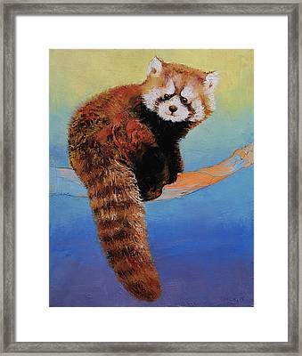 Cute Red Panda Framed Print by Michael Creese