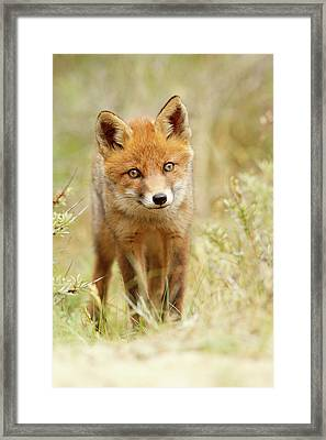 Cute Young Red Fox Cub Framed Print by Roeselien Raimond