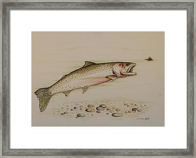 Cutthroat Trout Framed Print by Jeff Harrell