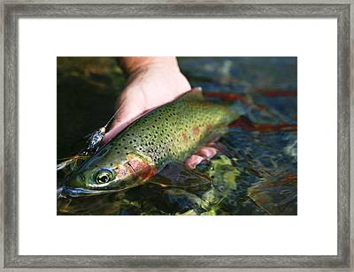 Cutthroat Trout On The Middle Fork Framed Print by Drew Rush