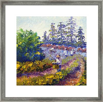 Cutting Lavender Framed Print by Terry  Chacon
