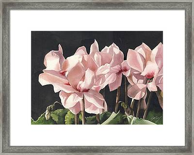 Cyclamen In Pink Framed Print by Alfred Ng