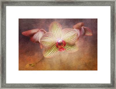 Cymbidium Orchid Framed Print by Tom Mc Nemar