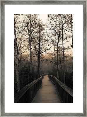 Cypress Boardwalk Framed Print by Gary Dean Mercer Clark