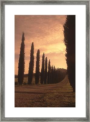 Cypress Driveway Framed Print by Andrew Soundarajan