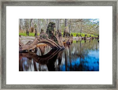Cypress Knee In Fisheating Creek Framed Print by Andres Leon