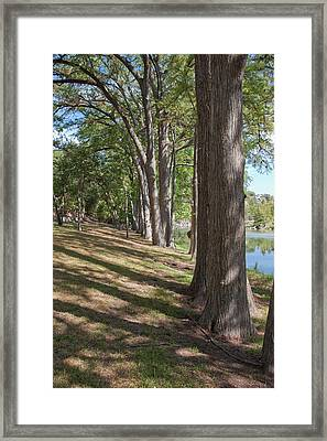 Cypress Shade Framed Print by James Woody