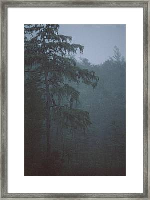 Cypress Swamp Framed Print by Kimberly Mohlenhoff