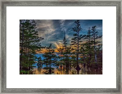Cypress Trees At Sunset Framed Print by Paul Freidlund