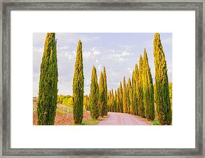 Cypress Trees In Tuscany Framed Print by Ariane Moshayedi