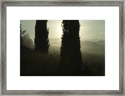 Cypress Trees Looming In Front Framed Print by Todd Gipstein