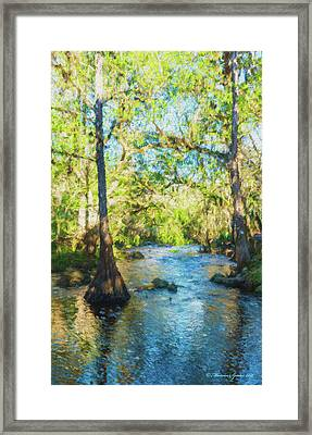 Cypress Trees On The River Framed Print by Marvin Spates