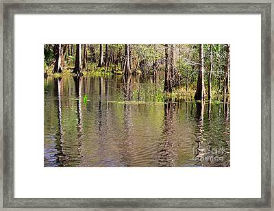 Cypresses Reflection Framed Print by Carol Groenen