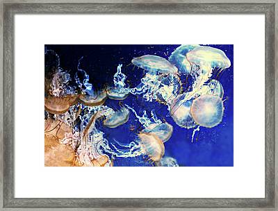 Winter's Chill Framed Print by Diana Angstadt