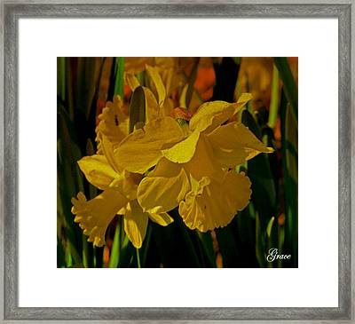 Daffodil Dance Framed Print by Julie Grace