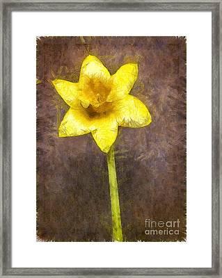 Daffodil Pencil Framed Print by Edward Fielding
