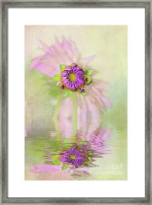 Dahlia Bud Reflection By Kaye Menner Framed Print by Kaye Menner