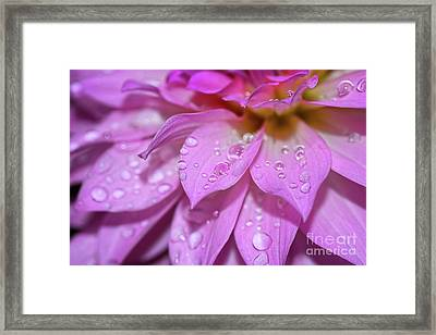 Dahlia Droplets By Kaye Menner Framed Print by Kaye Menner