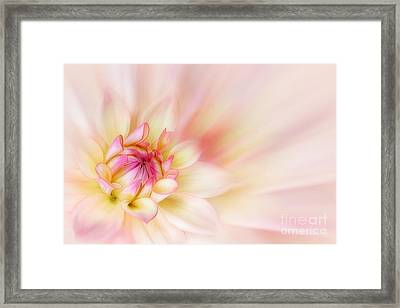 Dahlia Framed Print by John Edwards
