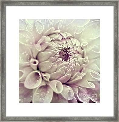 Dahlia Framed Print by SK Pfphotography