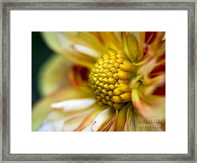 Dahlia Up Close Framed Print by KG  Photography
