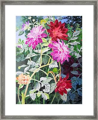 Dahlias 4 Framed Print by Vishwajyoti Mohrhoff