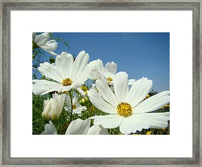 Daisies Flowers Art Prints White Daisy Flower Gardens Framed Print by Baslee Troutman