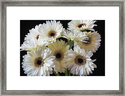 Daisy Bunch Framed Print by Garry Gay