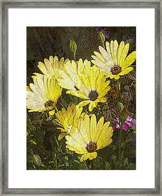 Daisy Daisy Framed Print by Tom Romeo