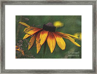 Daisy Framed Print by Diane E Berry
