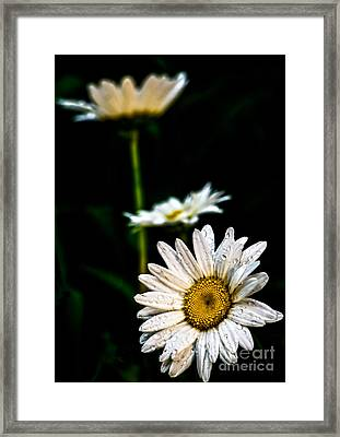 Daisy Dukes Framed Print by James Aiken