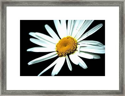 Daisy Flower - White Sun Framed Print by Alexander Senin