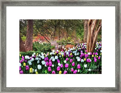Dallas Arboretum Framed Print by Tamyra Ayles