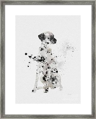 Dalmatian Framed Print by Rebecca Jenkins