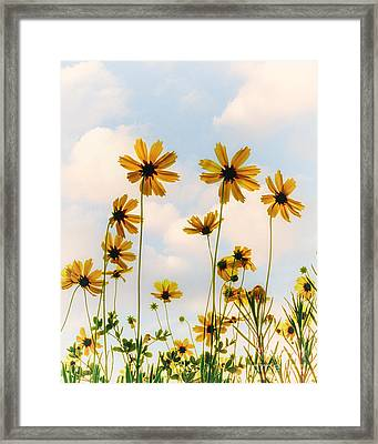 Dance Of The Coreopsis Framed Print by Tamyra Ayles